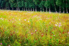 Flowers in the Loire