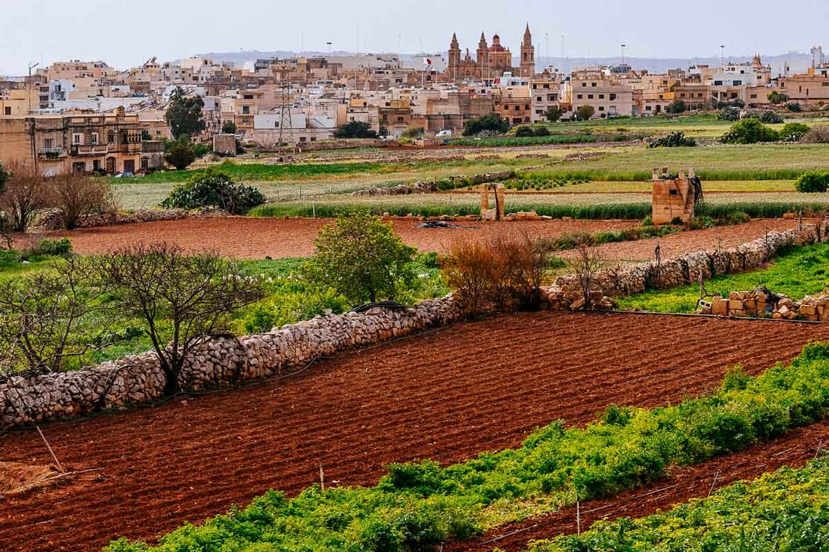 Cropland on Malta