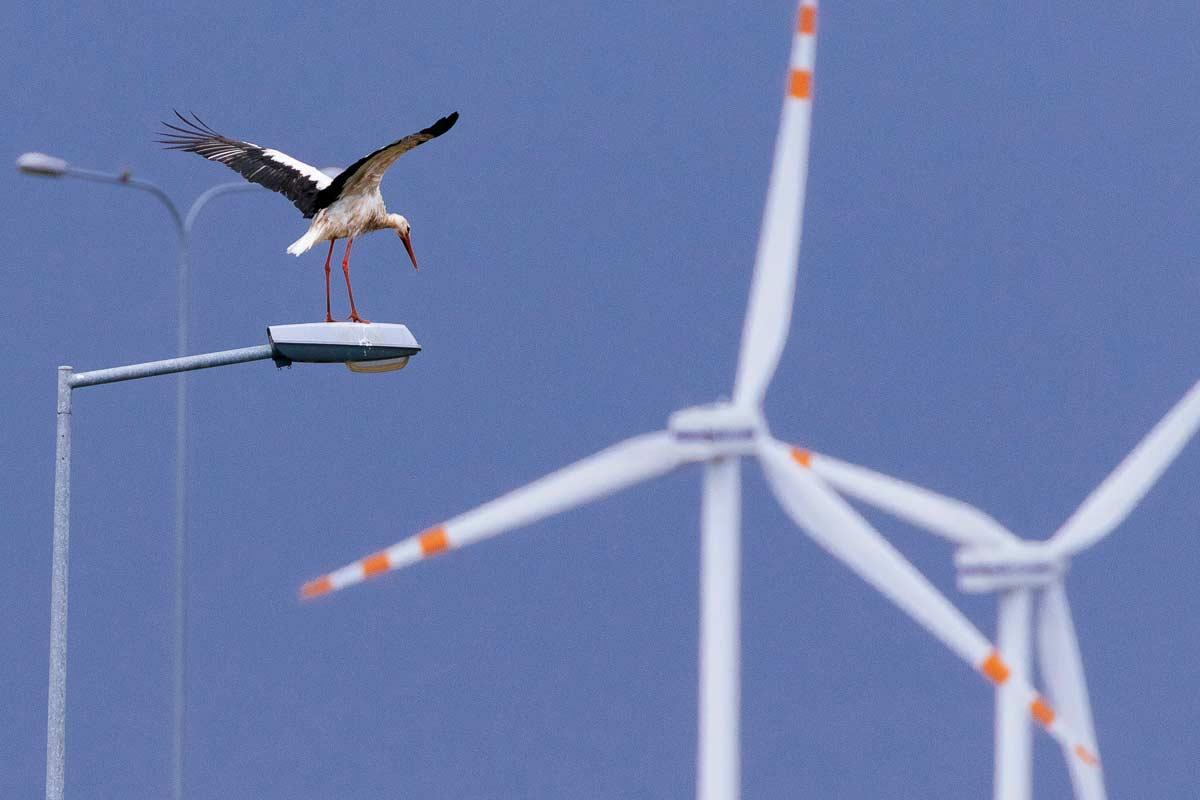 White stork and wind turbines