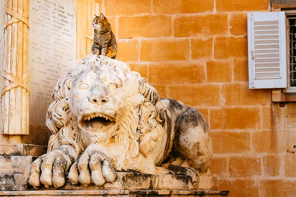 cat-on-lion-upper-barrakka-gardens-valletta-malta